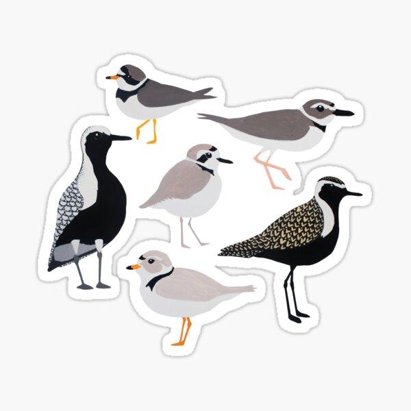 Plethora of Plovers Sticker