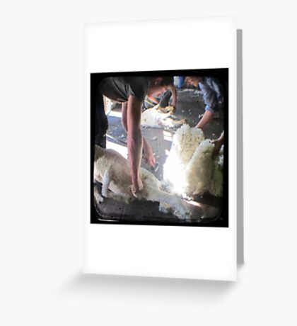The Shearer & The Rouseabout - TTV Greeting Card