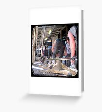 Heads Down, Bums Up - Shearing - TTV Greeting Card
