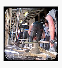 Heads Down, Bums Up - Shearing - TTV Photographic Print
