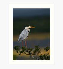 Majestic Heron Art Print
