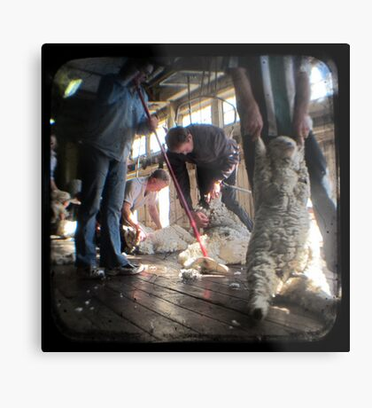 All Systems Go in the Deeargee Woolshed - TTV Metal Print