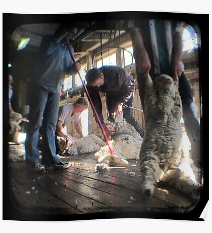 All Systems Go in the Deeargee Woolshed - TTV Poster