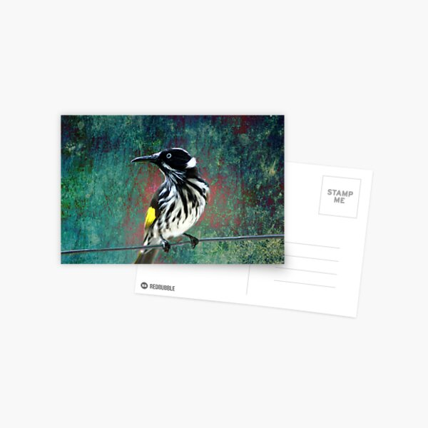 New Holland Honeyeater Postcard