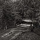 Bush Bridge by Jeff Catford