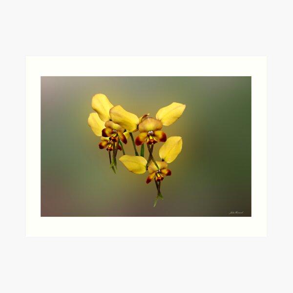 Dainty Donkey Orchid, Diuris aff recurva Art Print