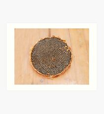 Dried Sunflower Head  Art Print