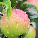 Almost Ripe by Lindamell