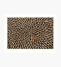 Seeds in Dried Sunflower Head  Art Print