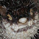 Unhappy Puffer Fish by angora998