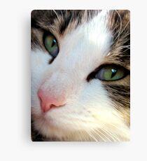 Puss Puss Canvas Print