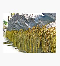 Seaweed and Rock Photographic Print