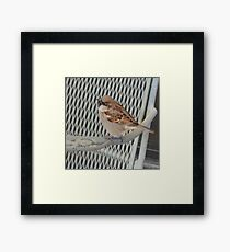 Sitting bird. Framed Print