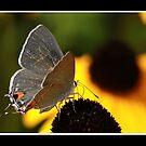 Butterfly by KatsEyePhoto