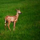 Little Fawn by Gaby Swanson