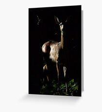 White-tail Deer Greeting Card