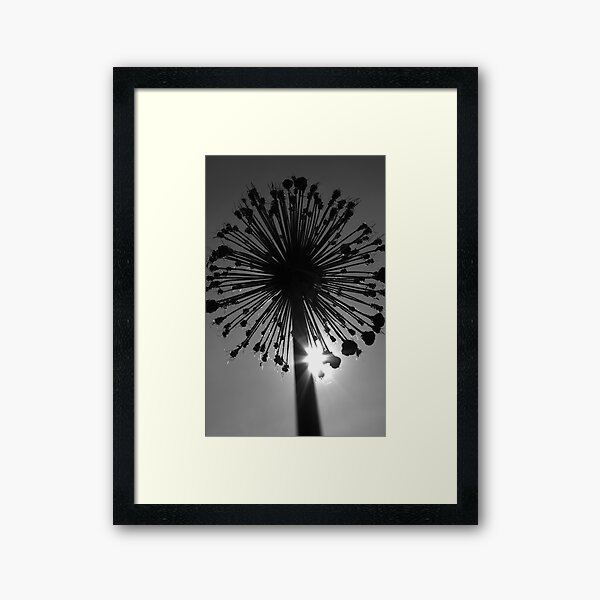 Eclipse Framed Art Print