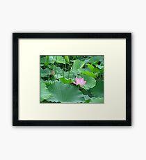 Lotus patch Framed Print