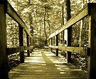 Footbridge to ?  by Marcia Rubin