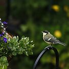 Young Great-tit Watching The Flowers (UK) by Michaela1991