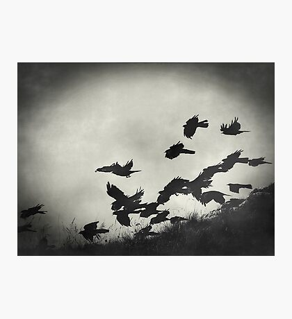 Night Flight Photographic Print