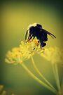 Pollination  by Joshua Greiner