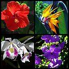 Tropical Beauties by Susanne Van Hulst