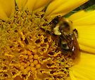 Camo Bee by Marcia Rubin