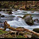 Little River by Christine Annas