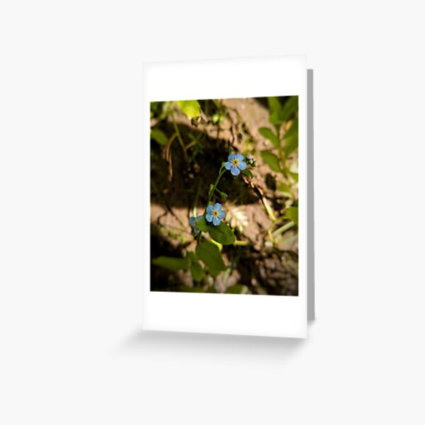 Blue Eyes on the Water Greeting Card