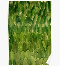 Leaves - Nature Poster