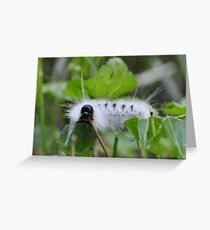 White and wooly Greeting Card