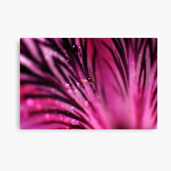 Pink Abyss Canvas Print