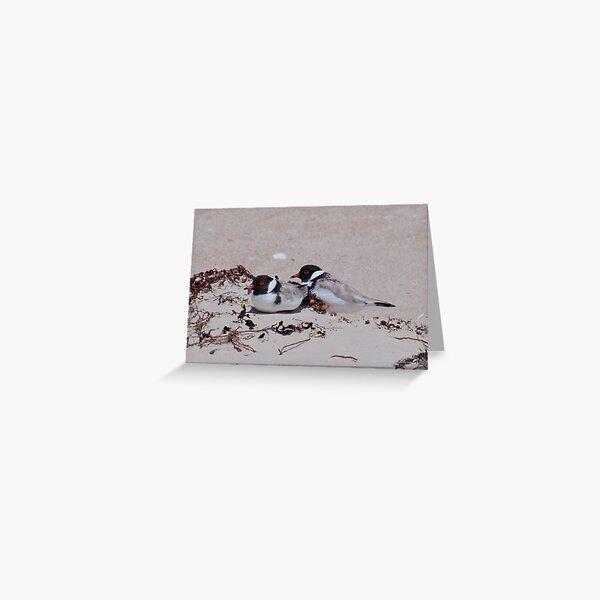 SHOREBIRD ~ Hooded Plover by David Irwin ~ WO Greeting Card