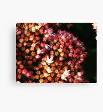 wonderful flowers Canvas Print