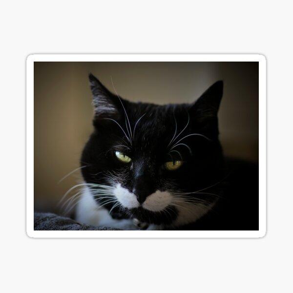 Katze, Kurzhaarkatze Sticker