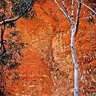 Bungle Trees and Rock Patterns by Nicola Morgan