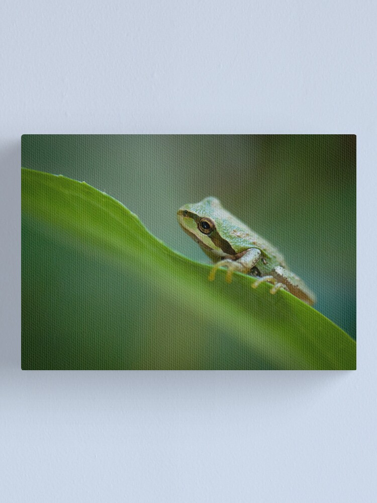 Alternate view of Frog on a Leaf Canvas Print