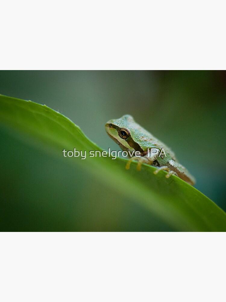 Frog on a Leaf by tobysnelgrove