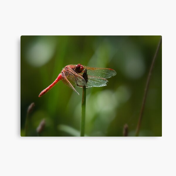 Tattered yet alive Canvas Print