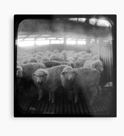 The Holding Pen - TTV Metal Print