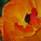 Orange and Lemon by Lozzar Flowers & Art