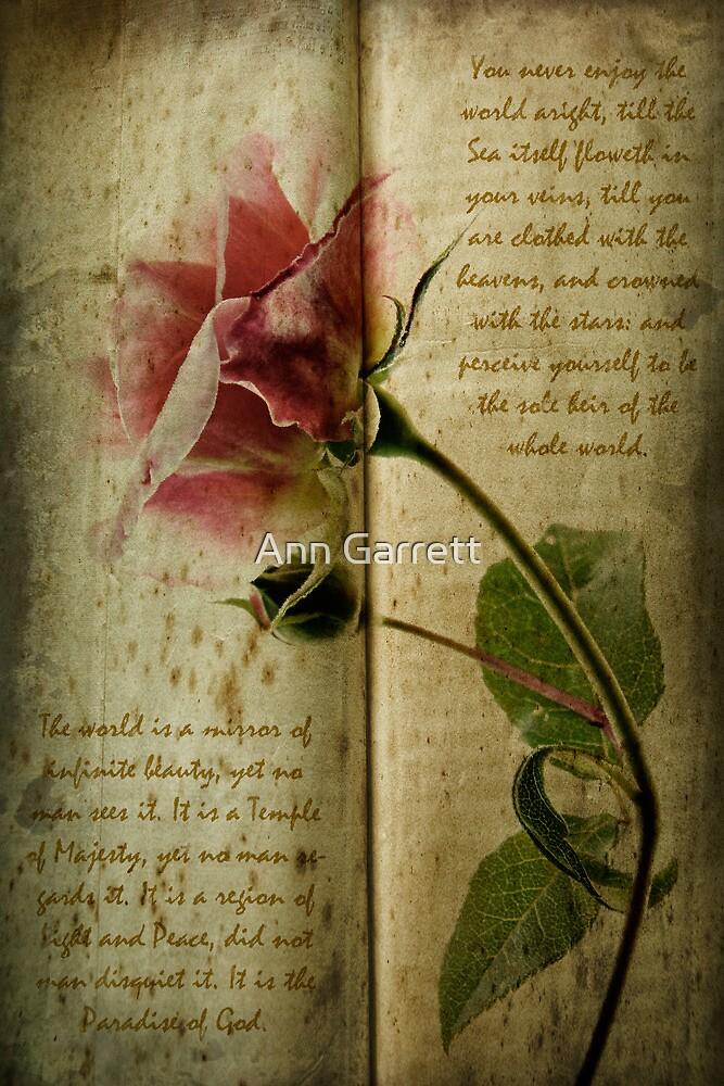 A Rose by Ann Garrett