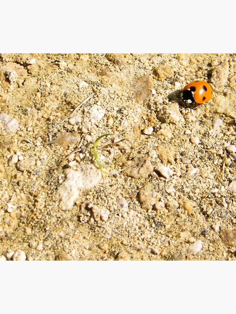 Ladybird by robsteadman
