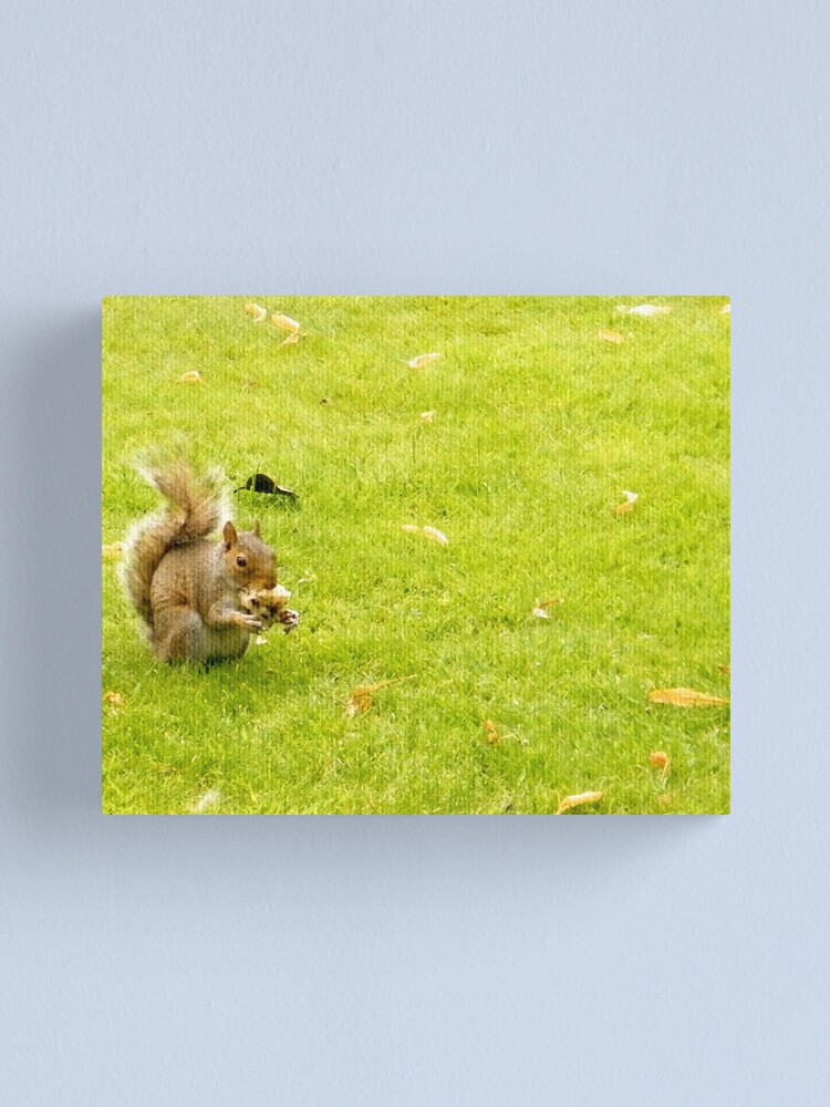 Alternate view of Squirrel Canvas Print