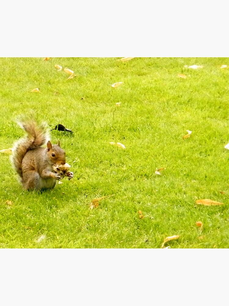 Squirrel by robsteadman