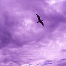 Bird in the sky by Robert Steadman
