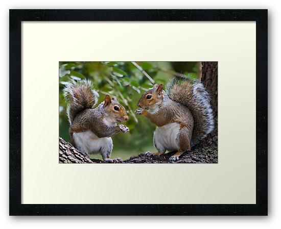 Squirrels Eating by Geoff Carpenter