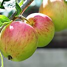 Apples On The Tree by Lindamell