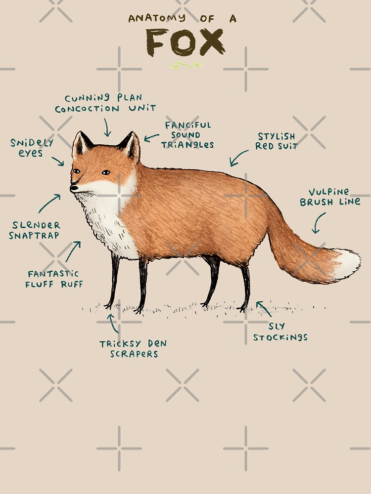Anatomy of a Fox by SophieCorrigan